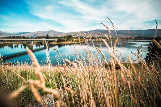 橋の背景と小麦スパイク