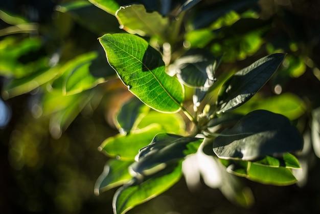 開花する自然の葉の屋外植物