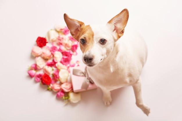 День святого валентина композиция с собакой и цветами.