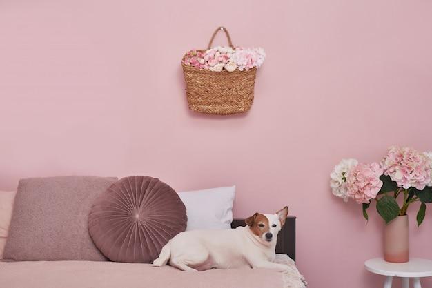 ピンクのインテリアのベッドの上のジャックラッセルテリア犬。動物のためのホテルコンセプト