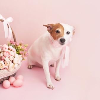 ジンジャーブレッドクッキー、犬と卵。