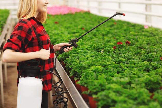 女の子は温室で働いて、植物をスプレーします。