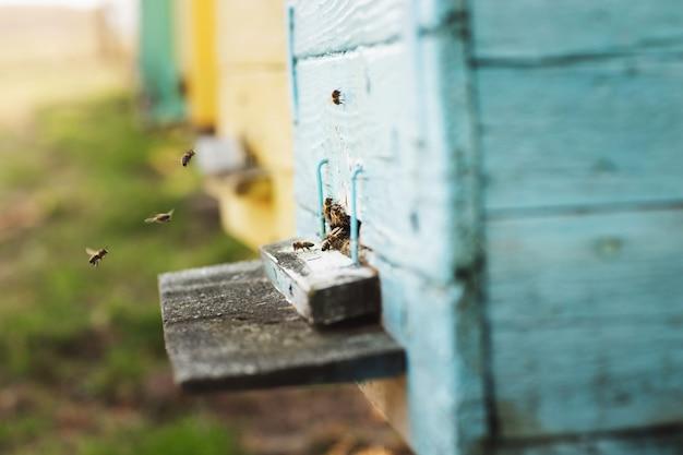 ミツバチの巣箱の細部をクローズアップ。