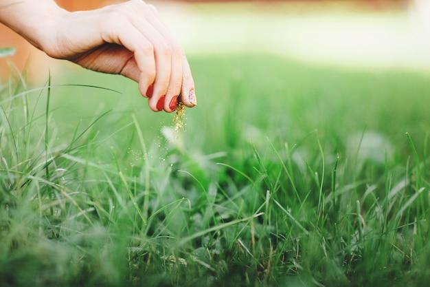 女性の手のクローズアップ、芝生の世話をします。