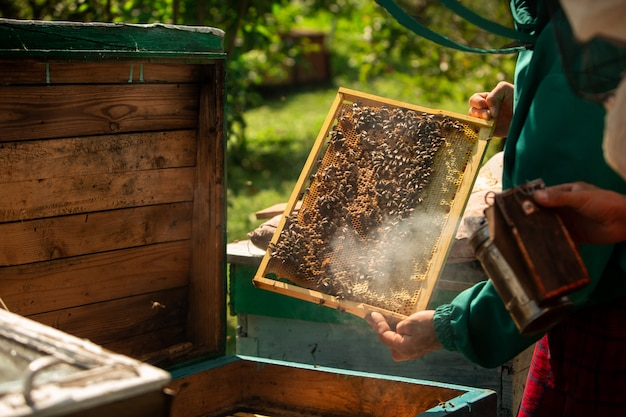 養蜂家が蜂蜜を収穫