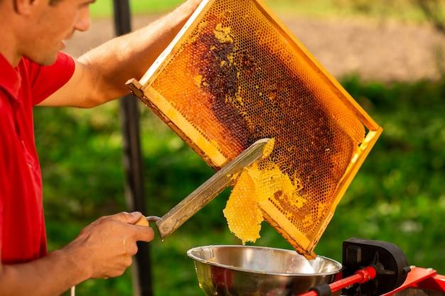養蜂家が特別な電気ナイフでハニカムフレームからワックスを切る