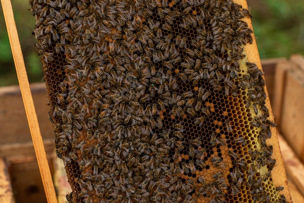 蜂でいっぱいのハニカムのクローズアップ
