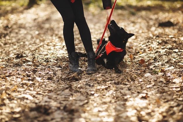 犬は秋の公園で飼い主と楽しんでいます
