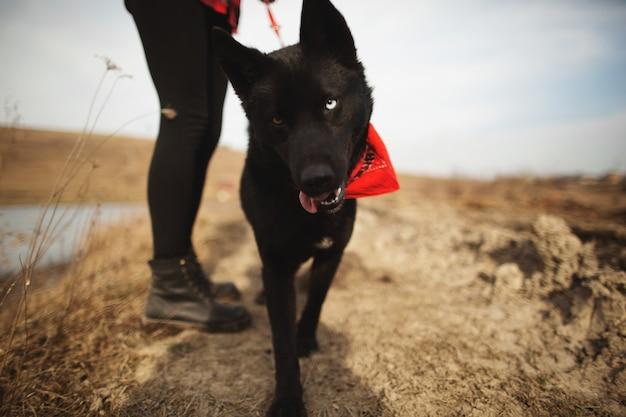 犬は秋の畑で飼い主と楽しんでいます