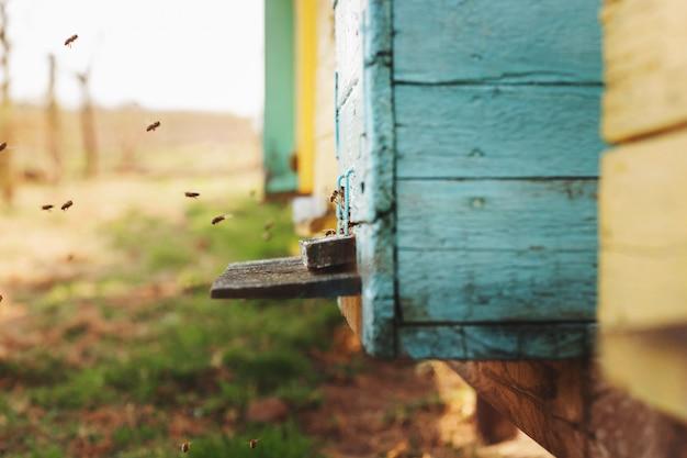 蜂ハイブの詳細をクローズアップ。