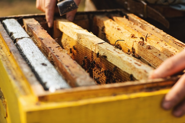 蜂ハイブの詳細。養蜂家は養蜂場でミツバチとハチの巣を使用しています。