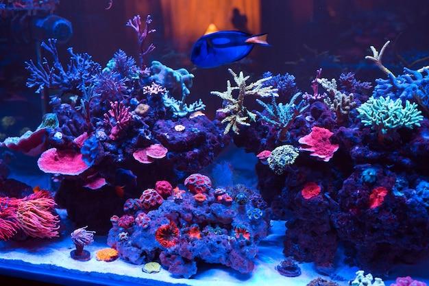 海洋水族館のサンゴ。