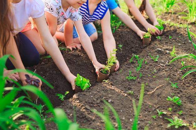 Детские руки сажают молодое дерево на черной почве как мировая концепция спасения