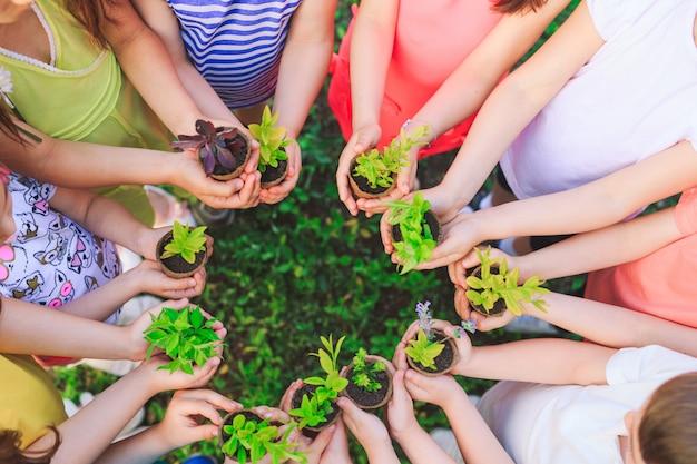 Люди руки банковский завод питают окружающей среды