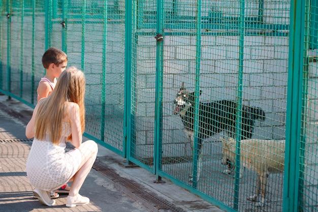 若い家族が犬の避難所でペットを探しています。