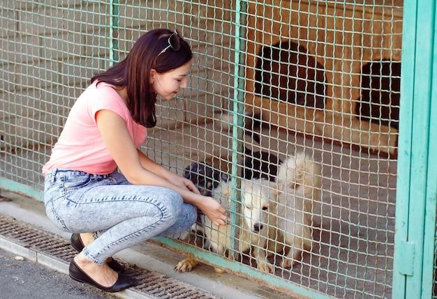 犬の保育園で女の子ボランティア。野良犬のための避難所。