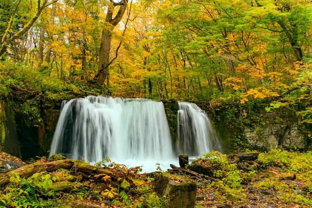 Чоши отаки водопады в красочной листве осеннего леса в ущелье ойрасе в национальном парке товада хатимантай, префектура аомори, япония.