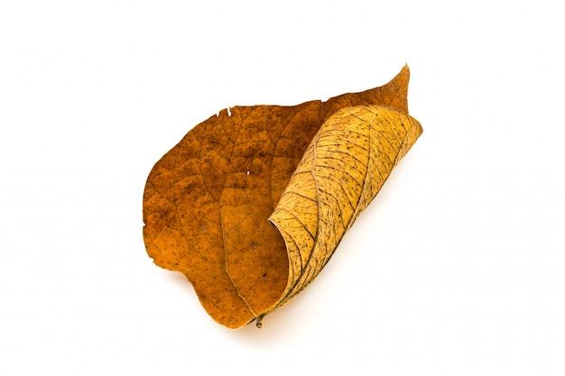 Грязный сухой лист на белом