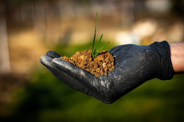 Засаживать молодое дерево рукой ребенк на задней почве как концепция заботы и спасения пустоши. фермер руки, держа завод в саду. новая концепция жизни.