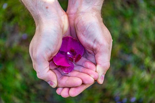 スパとウェルネスの詳細。水の蘭の花を持つ男性の手。男スパのコンセプトです。