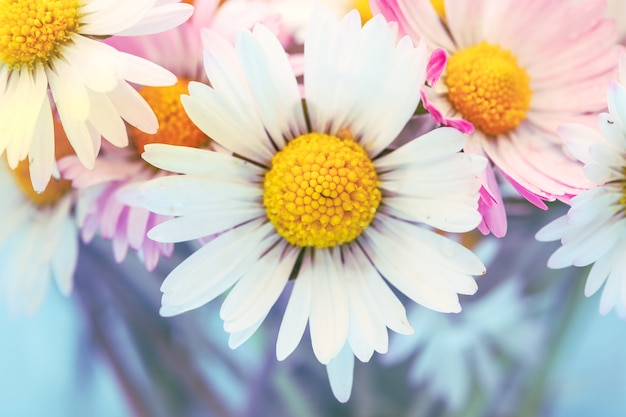 Цветы ромашки в винтажном стиле