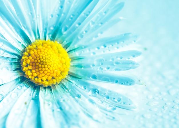 Цветок ромашка в бирюзовый на фоне природы
