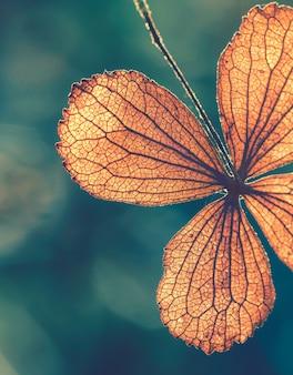 Лепесток сухого цветка гортензии