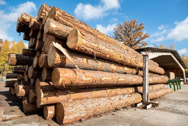 木の収穫-積まれた倒木の幹