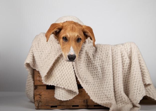 木製の箱の中の愛らしい子犬