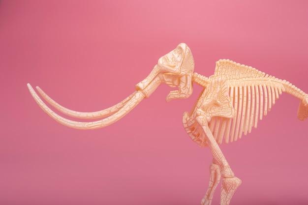 長い牙を持つ半分のマンモススケルトンのクローズアップ。