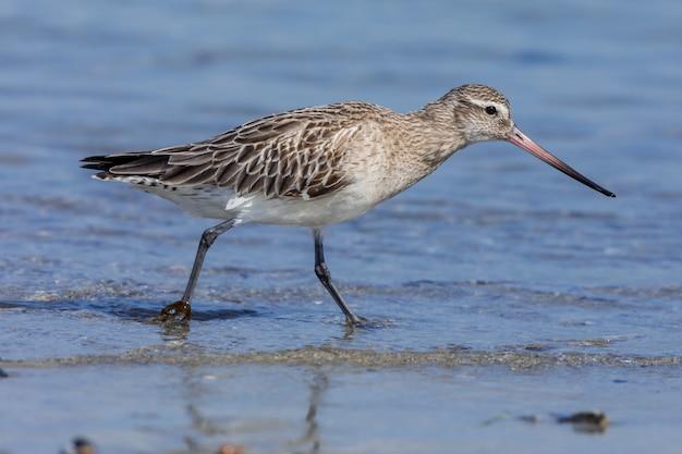 ビーチで鳥動物くちばし