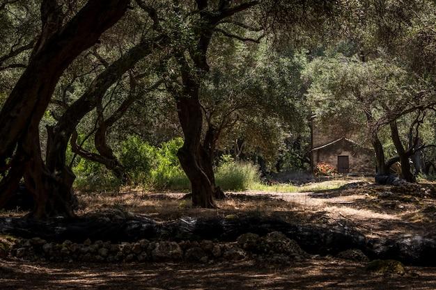 自然林の中の家