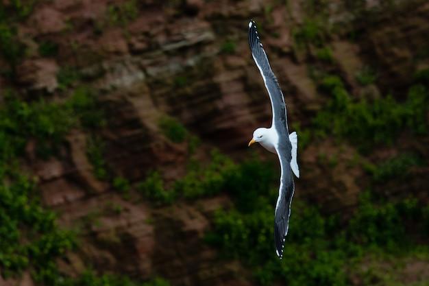動物の鳥の飛行とカモメ