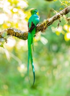 コスタリカの森の鳥動物