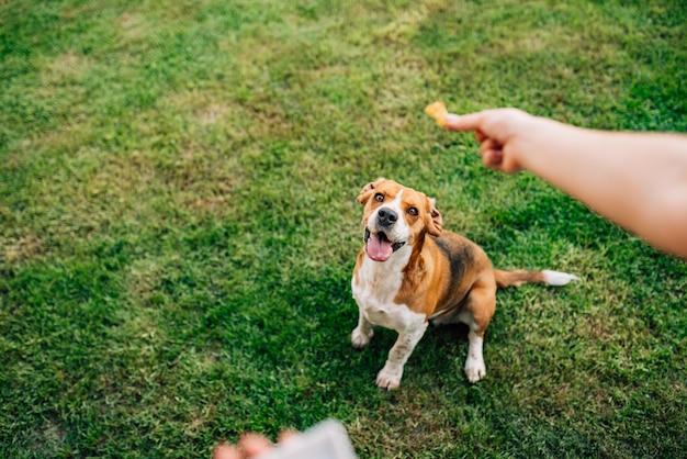 Кормление счастливой собаки лакомством.
