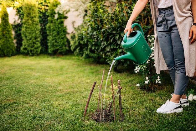 Поливает растение весной в домашнем саду.