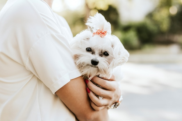 Счастливая женщина держит белую мальтийскую собаку. концепция дружбы и любви.