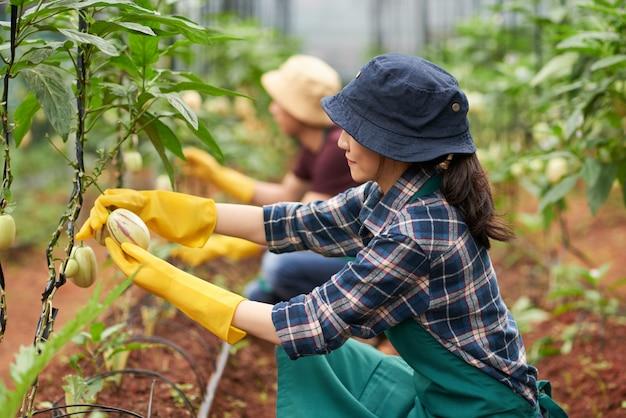 Вид сбоку женщины-агронома на коленях у завода