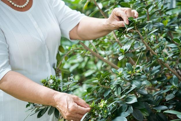 認識できない老婦人が庭の緑の植物のそばに立って、葉に触れる
