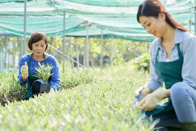 温室の農家