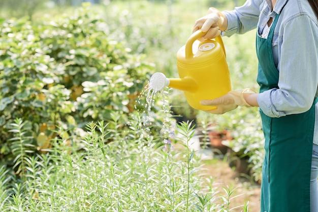 庭の植物に水をまく