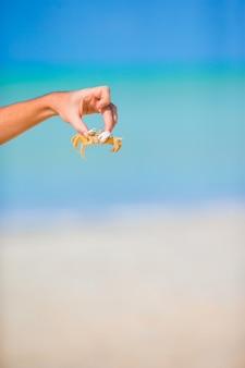 白いビーチで生きたカニを閉じる