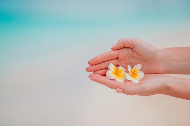 手で美しいプルメリアの花