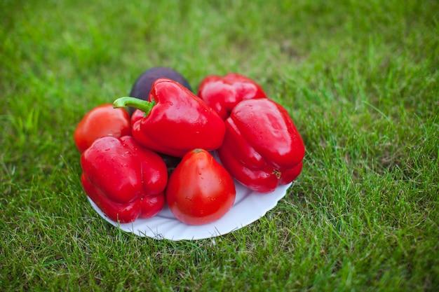 緑の芝生の上の赤ピーマンと白いプレート
