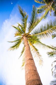 Кокосовая пальма на песчаном пляже и голубое небо.