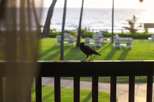 バルコニーの小鳥