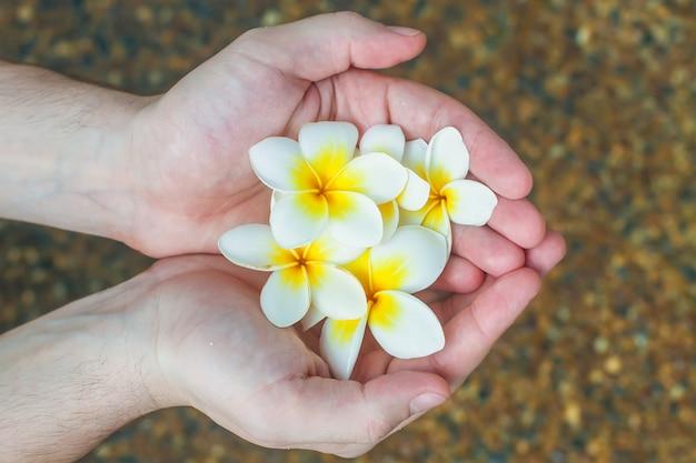 プルメリアの熱帯の花を保持している男性の手のクローズアップ
