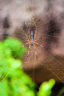Большой паук на своей паутине крупным планом