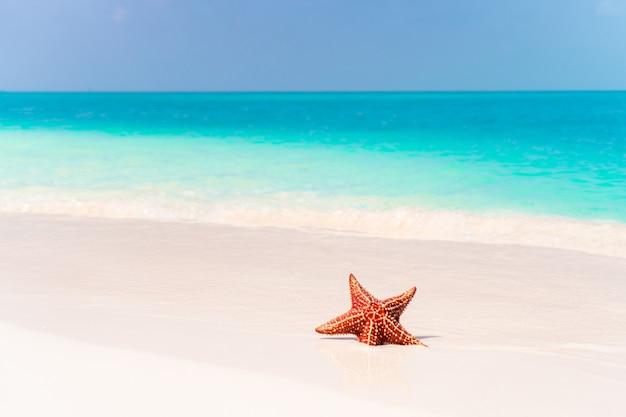 澄んだ水の赤いヒトデと熱帯の白い砂