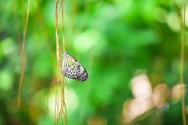 Бабочка на ветке крупным планом